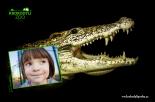 Kroko4